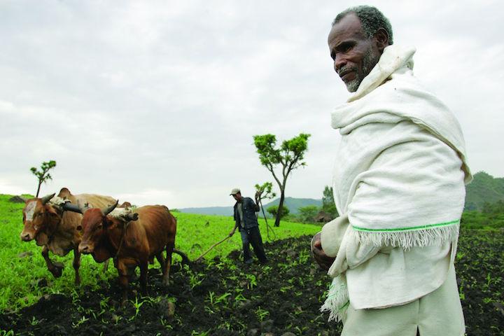 Ethiopia, lower Ghibe valley